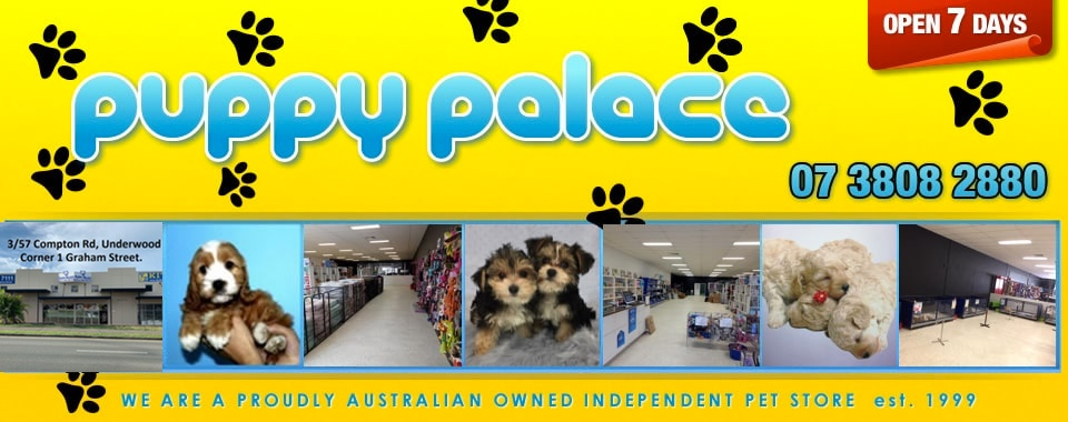 Puppies For Sale in Brisbane | Puppy Palace Pet Shop